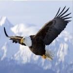 eaglelife