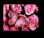 papillon21