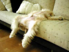 Image attachée: photos_humour_chiens_chiots_20__28_.gif